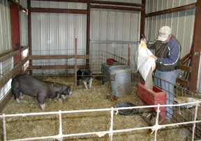 Swine Facilities at the University Farm